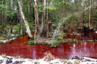 В Калининграде тоже появились красные реки