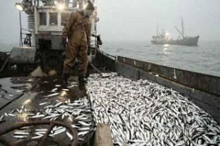 Европейский союз поддержал запрет на выброс рыбы