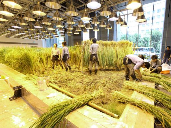 Вертикальная ферма в Токио