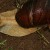 Австралийскими властями уничтожена гигантская улитка, которая угрожала фермерам
