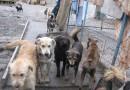 Отлавливать и содержать бродячих животных в Иркутске будет ООО «Пять звезд»