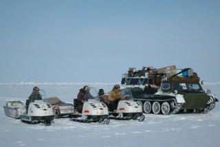 В российской Арктике начинают свою работу «Медвежьи патрули»