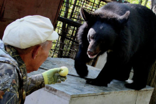 Приморские журналисты ищут средства для медведей, которые живут у пенсионеров