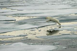 Отказ компании Шелл от бурений в Арктике должен служить примером для других компаний — WWF