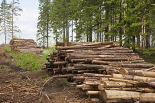 В России от незаконной вырубки леса ежегодный ущерб составляет более 10 миллиардов рублей