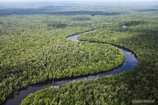 В Индонезии приостановили вырубку лесов