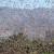 Саранча, которая двигается с юга Египта, недавно появилась в столице Египта
