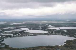 Мишенью экспериментальных болот Уэйко будет лекарственное загрязнение
