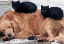 В Казани чиновники обсудили проблему бродячих собак