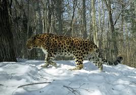 На территории национального парка, который называется «Земля леопарда» обнаружили нелегальный котлован