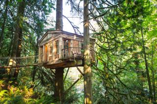 Мини-отель на деревьях