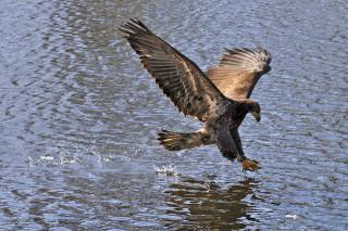 Американские ученые воссоздают возможности птиц на беспилотных летательных аппаратах