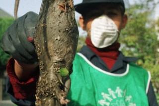 В Тегеране началась борьба с полчищами крыс-мутантов