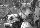 В Украине запустили проект помощи беспризорным животным «Мобильное опекунство»