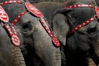 В США ищут злоумышленников, стрелявших в слона
