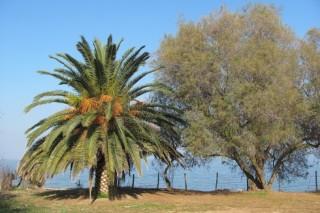В Казахстане создали мини-электростанцию в виде пальмы
