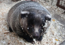 В Приморском крае партию просроченных яиц отправили на скармливание животным в зоопарке
