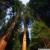 Лесные ресурсы осваиваются как в советское время