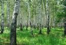 Как обеспечить эффективную защиту леса в новых условиях