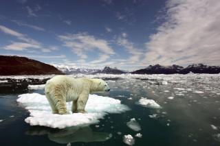 Современные проблемы экологии окружающей среды