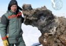Российские ученые обнаружили мамонта, у которого сохранилась жидкая кровь