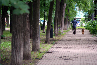 Ради расширения дороги в Нижнем Новгороде срубят сотню деревьев в парке