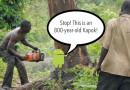 Смартфоны помогут побороть вырубку лесов в Индонезии
