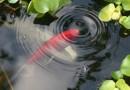 Окупаемые экологические приемы очистки водоемов