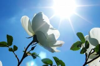 О вечных источниках энергии. Солнечная энергия. Часть 1