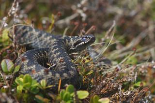 Минздрав назвал столичные районы, где наблюдается наибольшая активность змей