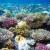 Осветление морских облаков защитит коралловые рифы и охладит поверхность океанов