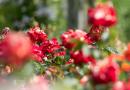 За высадку цветов москвичи будут получать книги