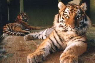 Млекопитающие способны манипулировать полом своих потомков