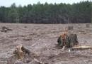 Беспощадная вырубка леса в Нагорном Карабахе грозит обернуться природной катастрофой