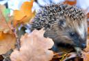 На Алтае начала работу передвижная фотовыставка о природе