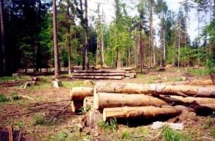 В Белоруссии лес будут выращивать на искусственных плантациях