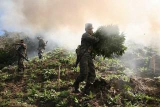 Мир проиграл наркотикам войну