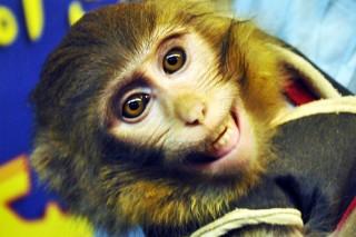 Иран в космосе представит обезьяна, а не кот
