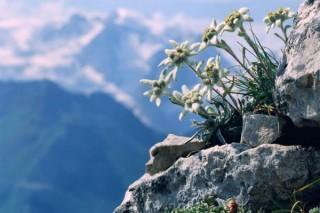 Глобальное потепление заставлять растения уходить в тундру и в горы