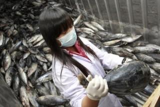 В водах возле «Фукусимы» ученые обнаружили зараженную радиацией рыбу