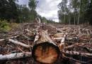 В России незаконно вырубается 800 000 гектаров леса каждый год