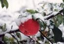 Осень в России отменяется