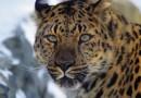 WWF собирает пожертвования на защиту исчезающих видов животных