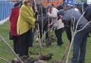 В Ульяновске заверилась акция по высадке деревьев и кустарников