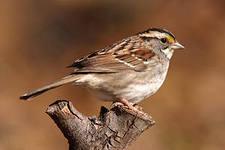 Птицы прогнозируют погоду благодаря чувствительности к давлению