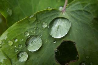 Крупнейшая гибель всего живого на Земле произошла по вине кислотных дождей