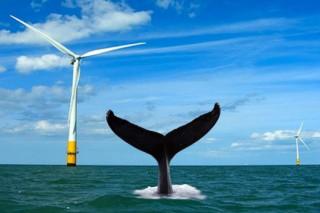 Строительство гигантского берегового ветропарка сдвинулось с места