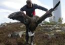 Американский президент вмешался в противостояние защитников птиц и владельцев ветропарков