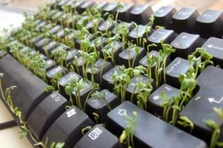 Российский Гринпис определил самый «зеленый» офис