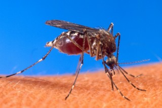 Отпугиватели комаров – гуманная мера для природного баланса